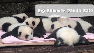 Big Panda Sale, Anyone Interested? | iPanda