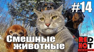 Смешные животные #14 Видео приколы с животными 2018