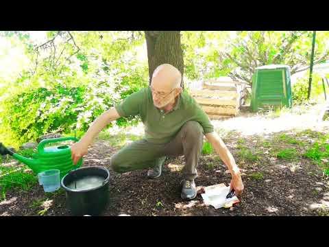 A test tisztítása a paraziták után