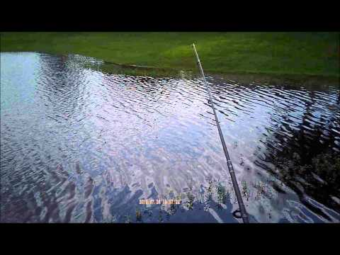 Pond bass fishing with lizard baits.