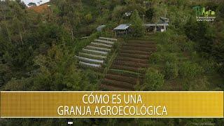 Como es una granja agroecologica - TvAgro por Juan Gonzalo Angel Restrepo