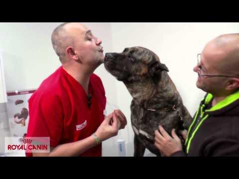 Problema articular en perros