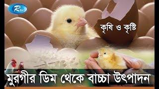 Krishi o Krishti | মুরগীর ডিম থেকে বাচ্চা উৎপাদন | EP-91 | Rtv Lifestyle | Rtv