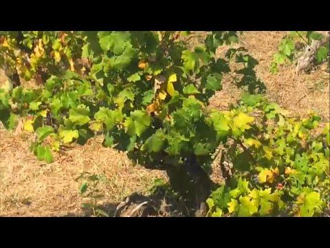 Un viaggio a Manduria, terra del vino Primitivo