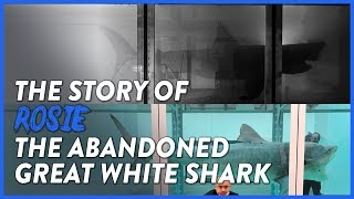THE STORY OF SHARK ROSIE - LEFT TO ROT AT AN ABANDONED WILDLIFE PARK