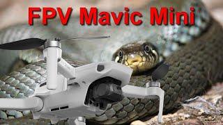 Drone encontra COBRA durante FPV na mata - FPV Mavic Mini