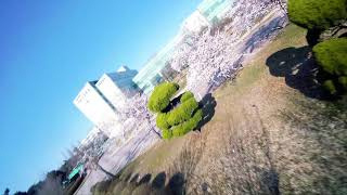 Cherry blossom riding (fpv freestyle)