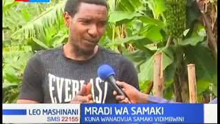 Wakulima wa samaki katika Nyeri Kaunti wapambana na hali ngumu
