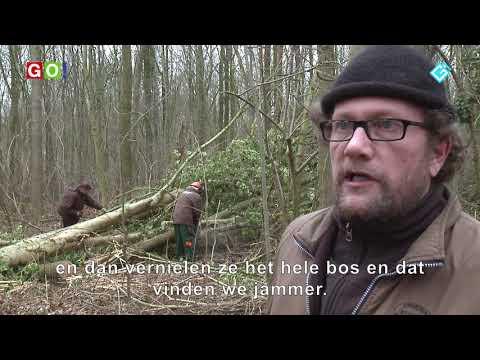 Paarden in natuurgebied de Hoogte! - RTV GO! Omroep Gemeente Oldambt
