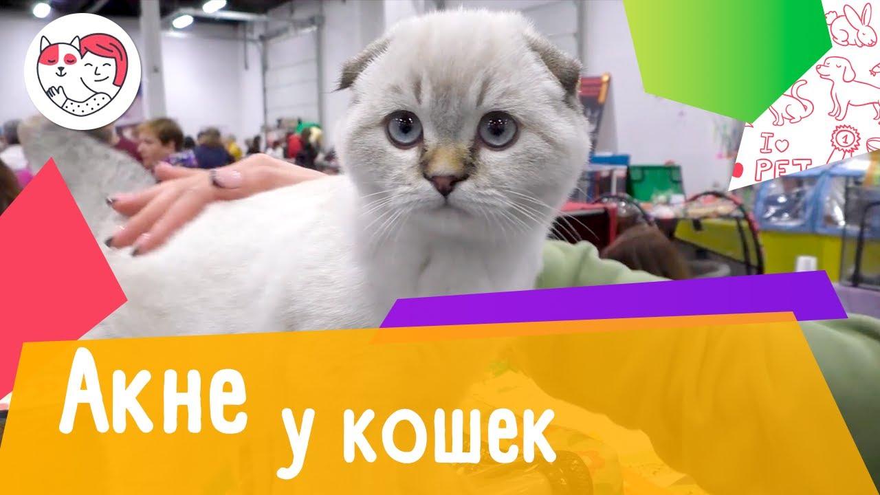 5 популярных вопросов про акне у кошек