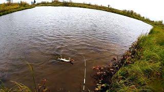 Отчеты по рыбалке в коми