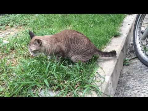 หนอนแมวไม่ได้หายไป