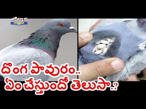 Pigeon Caught with Backpack of Drugs | Jordar News | HMTV