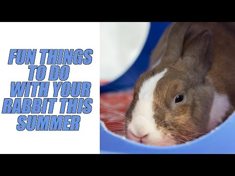 FUN THINGS TO DO WITH YOUR RABBIT THIS SUMMER!!!