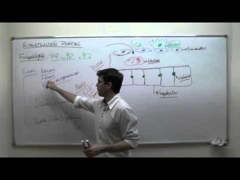 Los comprimidos fenobarbital papaverina Dibazolum