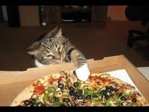 Näin käy jos pizzaan ei laita ananasta