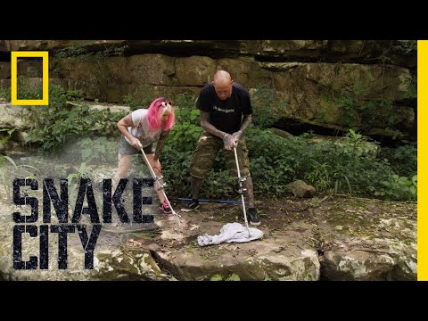 Time to Release the Mamba | Snake City