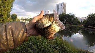 Рыбалка в черневском пруду