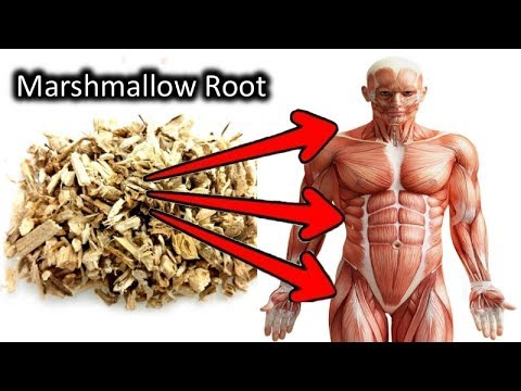 Download 7 Unbelievable Things Marshmallow Root Can Do To Your Body Mp4 HD Video and MP3