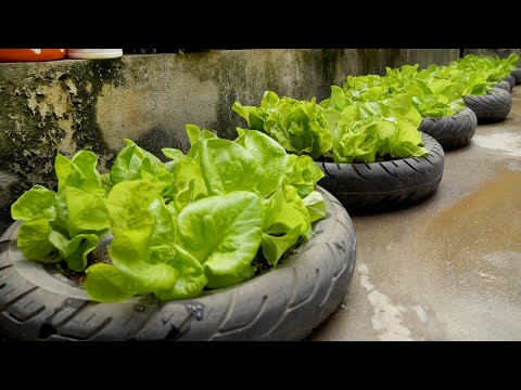 Awesome Ideas | Recycling Old Tires to Growing Vegetables for the Family