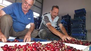 preview picture of video 'HADİM KİRAZ ALIM MERKEZİ'