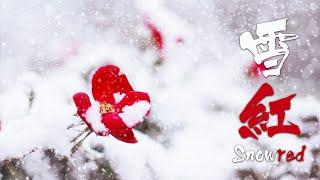 雪紅 -Snowred- (설홍) by Plum / 아련하고 웅장한 동양풍 오케스트라곡