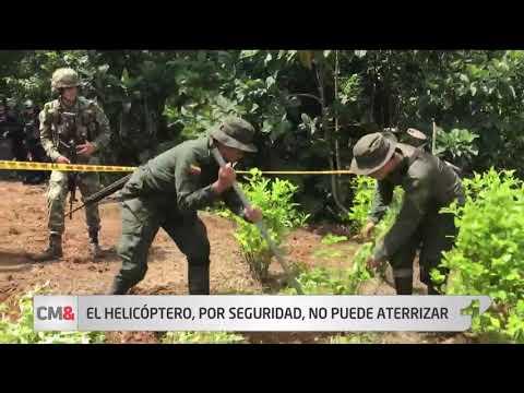 Drama en la erradicacion de coca