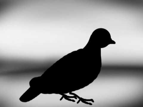 , title : 'Pigeon-head walk theory