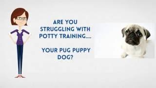 How To Potty Train A Pug Puppy   House Train A Pug Fast
