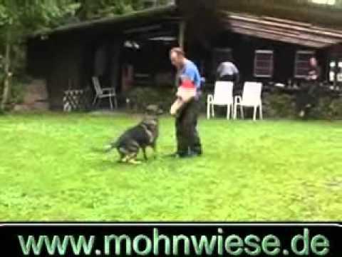 Preview video Taifun von der Mohnwiese -