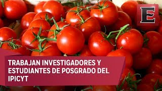 Desarrollan en México semilla genética de jitomate resistente a bacterias | Kholo.pk