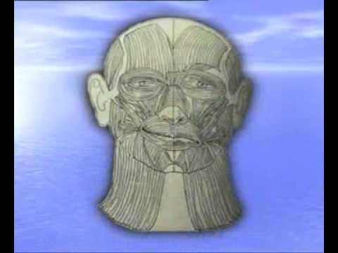 Пластическая подтяжка лица и шеи