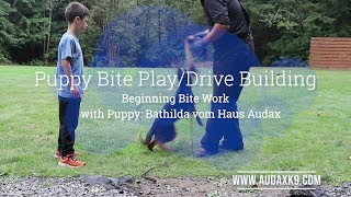 B Litter - Pre-Teething Puppy Bite Work