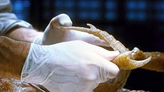 人类创造新型昆虫,三年就进化了几万代,甚至还长出了人脸!