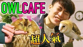 【會跳舞的貓頭鷹!?】人氣超治癒OWL CAFE♡