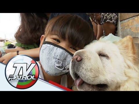 [ABS-CBN]  Matapos mag-viral ang retrato, tulong bumuhos para sa batang nagbantay sa aso sa Taguig   TV Patrol