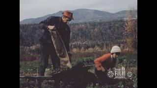 Harvesting vegetables in Alaska