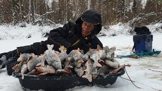 Клев рыбы в ханты-мансийске с начала декабря