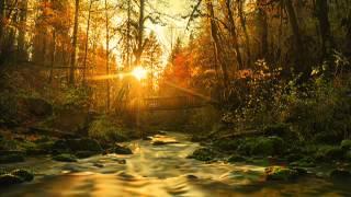 Релакс, звуки природы, ручей в лесу, гармония и чистота воды для спокойного сна и расслабления.