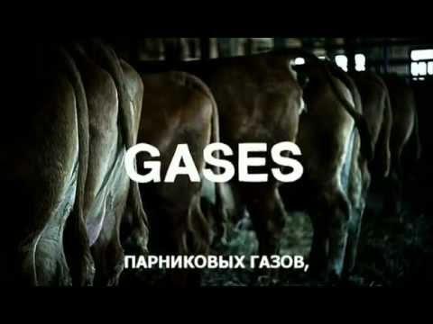 «Правда о мясе» («Meat The Truth») Документальный фильм