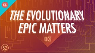 Why the Evolutionary Epic Matters: Crash Course Big History #203