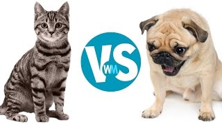 Cats Vs Dogs: Which Makes a Better Pet?