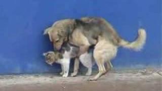 Dog humping a cat