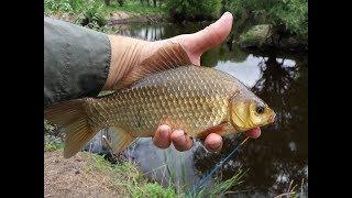 Рыбалка в хороле приморский край