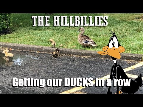 Getting our ducks in a row