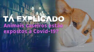 Os pets podem pegar Covid-19? | Tá Explicado