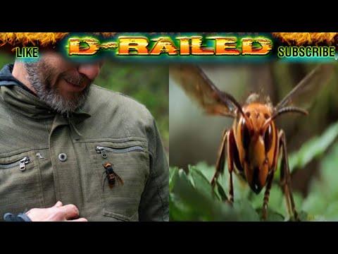 MURDER HORNETS – Asian Giant Hornets Enter the US in Washington State