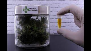 Remédios com cannabis - Continuação da Discussão e Votação do Parecer do Relator - 18/05/2021 09:00