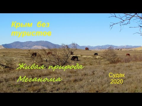 Крым, Судак 2020, Меганом без туристов. Живая природа зимним утром 13 января