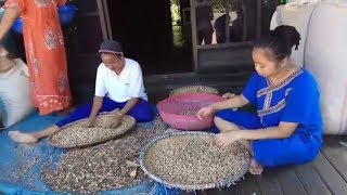 Kacang Kulit Besangrai Desa Jati Baru Mempunyai Rasa Alami
